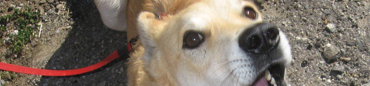 KGZ – Wo sich Hundefreunde treffen